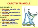 carotid triangle