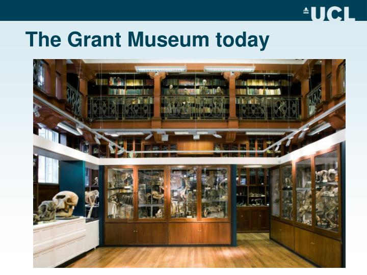 The Grant Museum today