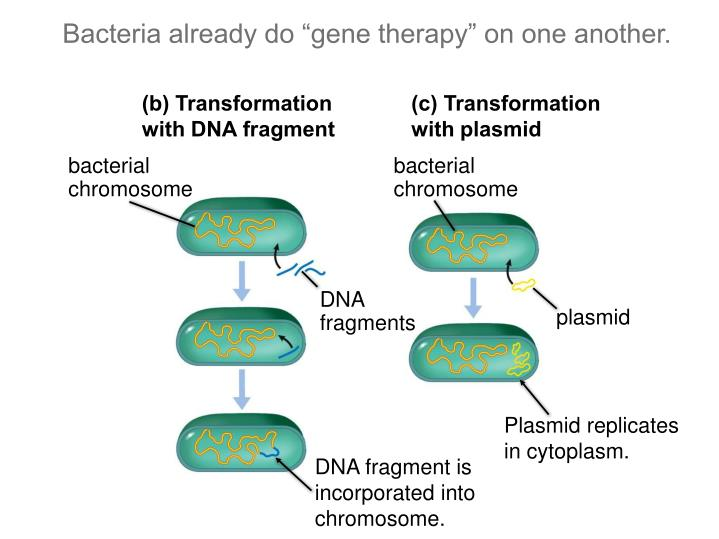"Bacteria already do ""gene therapy"" on one another."