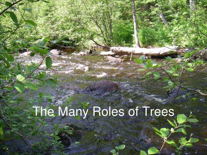 The Many Roles of Trees