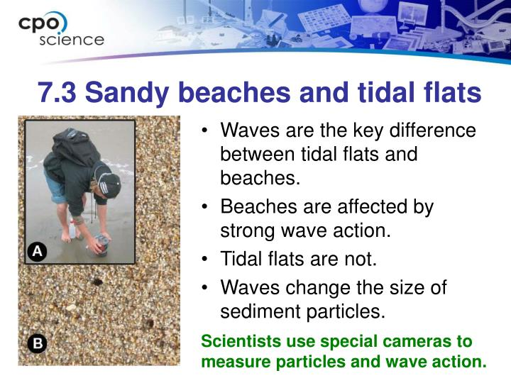7.3 Sandy beaches and tidal flats