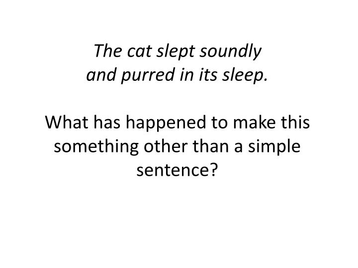 The cat slept soundly