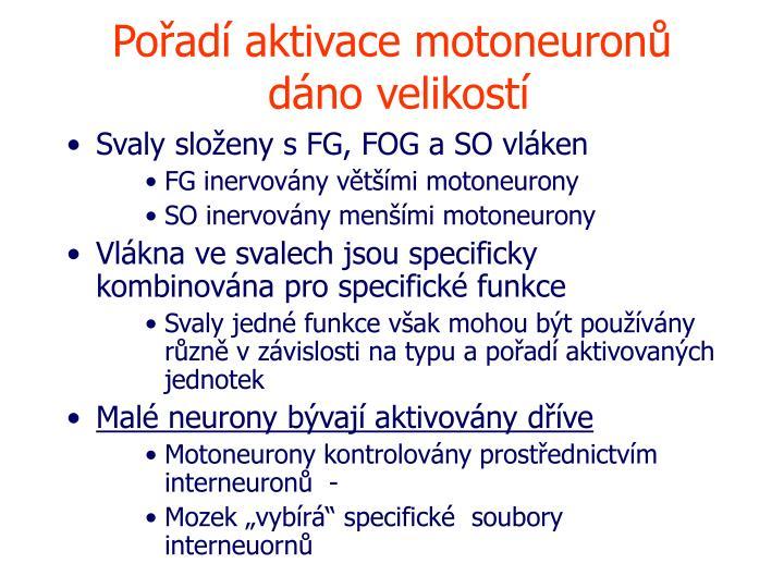 Pořadí aktivace motoneuronů