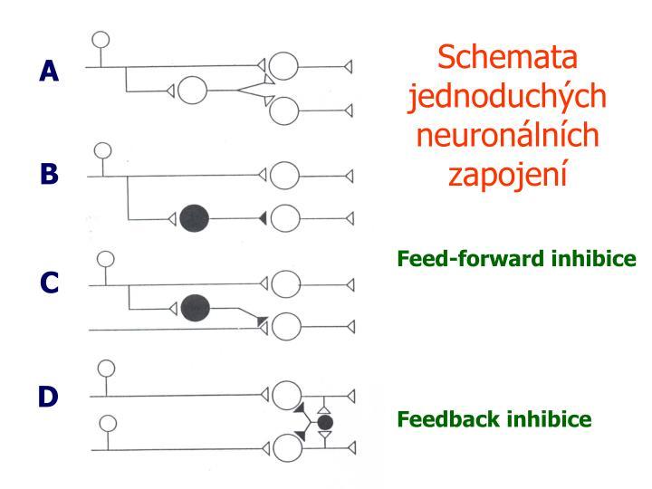 Schemata jednoduchých neuronálních zapojení