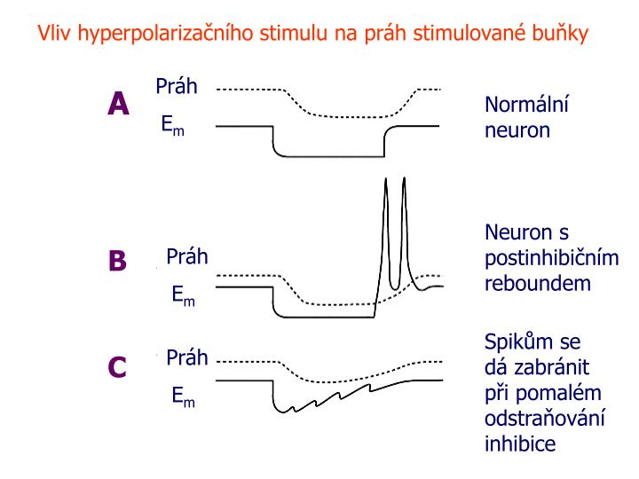 Vliv hyperpolarizačního stimulu na práh stimulované buňky