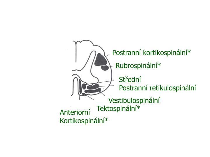 Postranní kortikospinální*