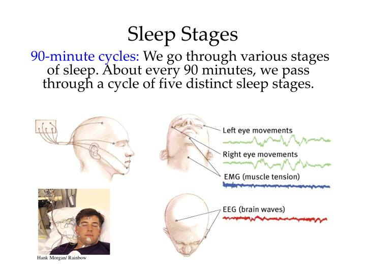 the four stages of sleep Each night healthy people go through 3 stages of sleep and the rem phase people who suffer from rem disorders may talk, scream, or act out vivid dreams.