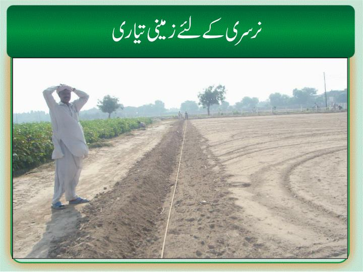 Nursery/soil preparation