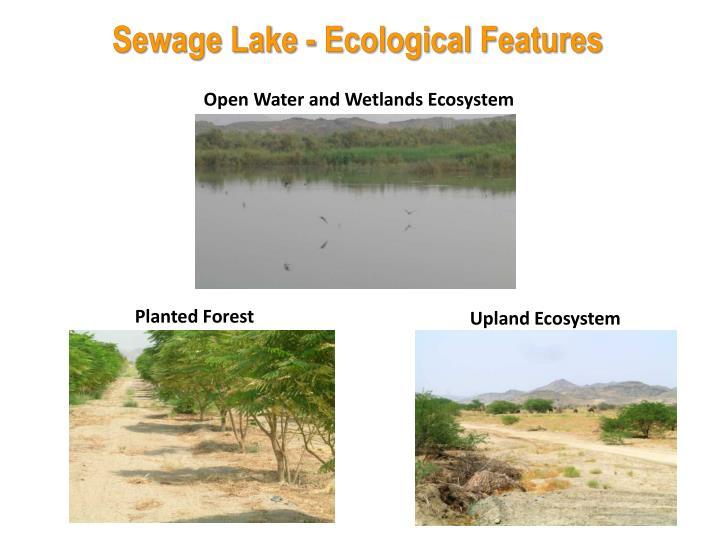 Sewage Lake - Ecological Features