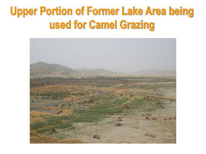 Upper Portion of Former Lake Area being used for Camel Grazing