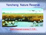 yancheng nature reserve