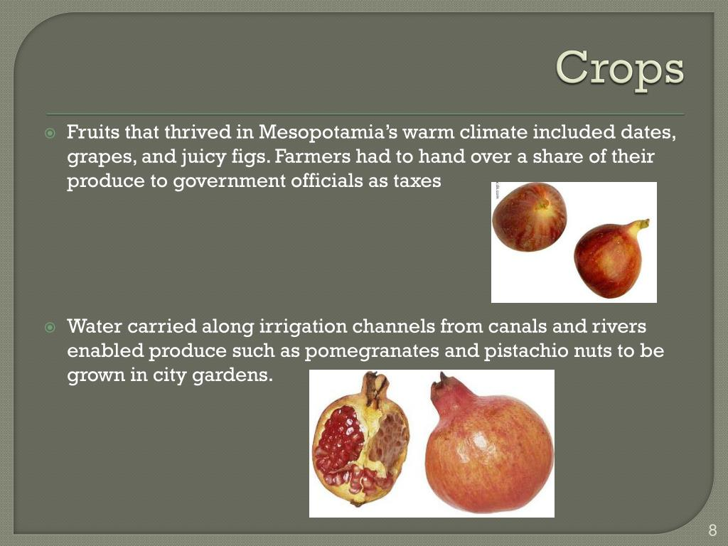PPT - Mesopotamia Chapter 1, Section 2 PowerPoint