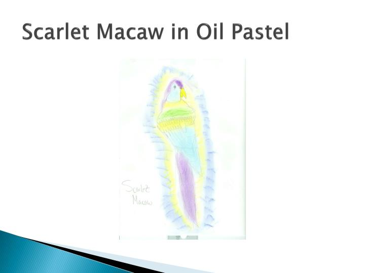 Scarlet macaw in oil pastel