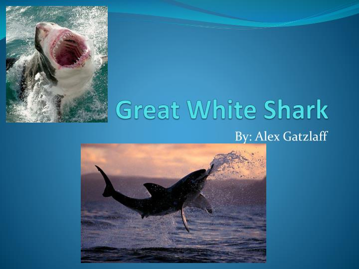 Ppt Great White Shark Powerpoint Presentation Id5359752