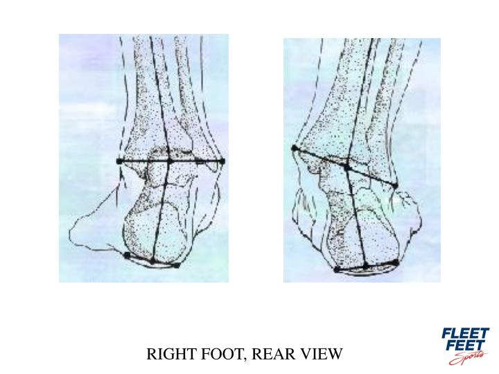 RIGHT FOOT, REAR VIEW