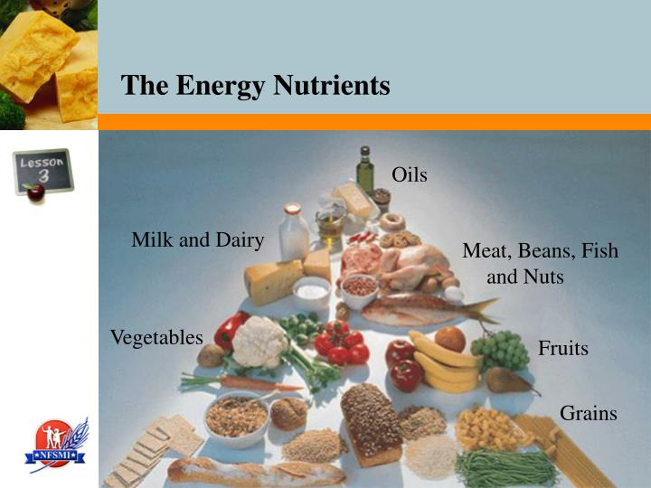 The energy nutrients1