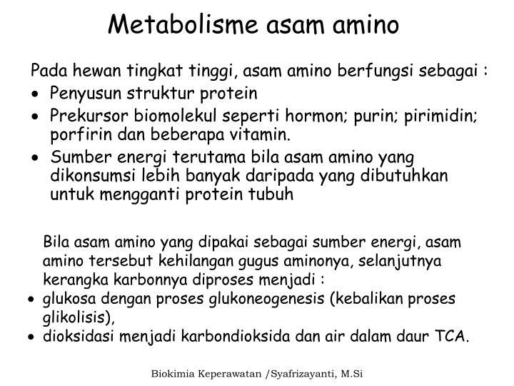 Metabolisme asam nukleat ii. Ppt metabolisme asam nukleat.