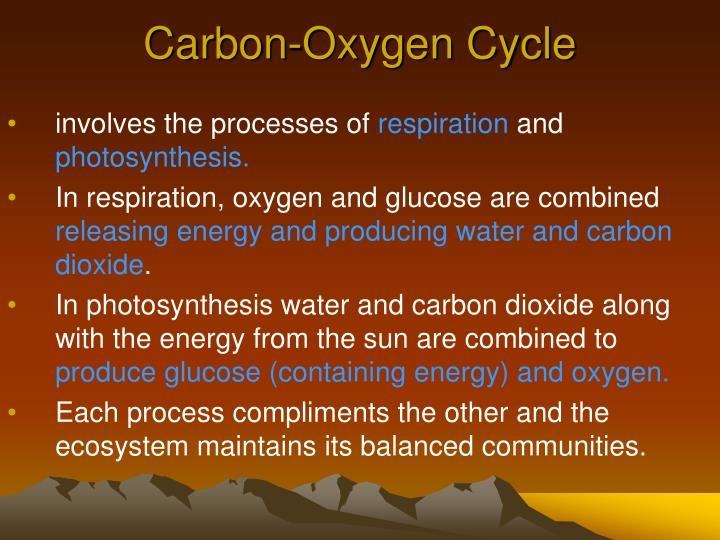 Carbon-Oxygen Cycle