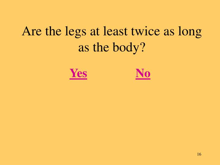 Are the legs at least twice as long as the body?
