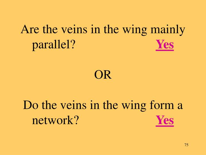 Are the veins in the wing mainly parallel?
