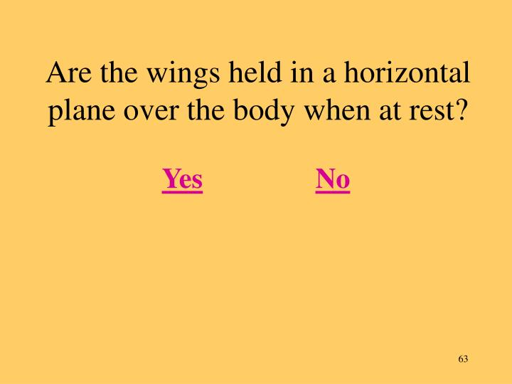 Are the wings held in a horizontal plane over the body when at rest?