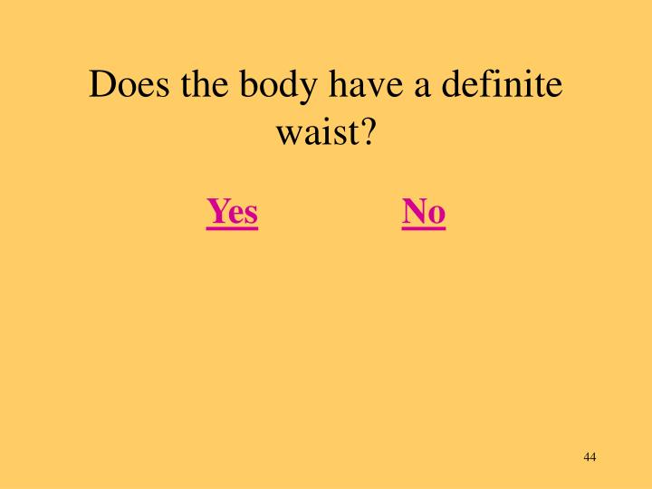 Does the body have a definite waist?