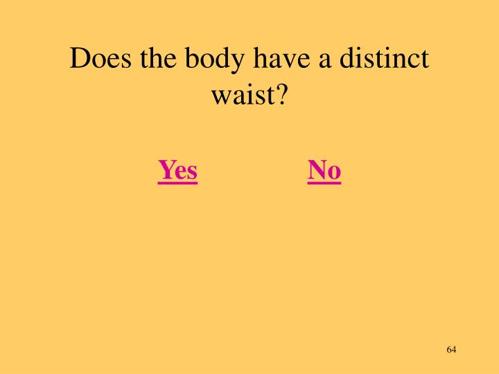 Does the body have a distinct waist?