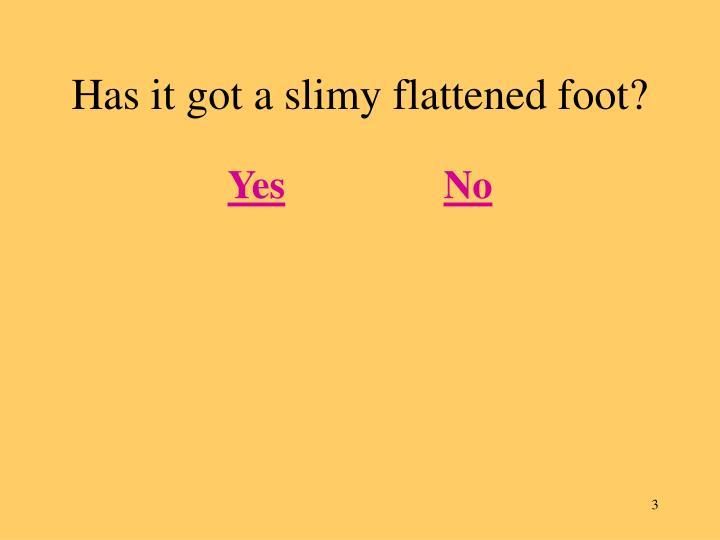 Has it got a slimy flattened foot