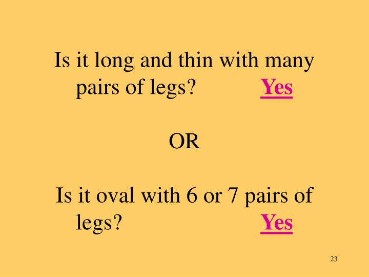 Is it long and thin with many pairs of legs?