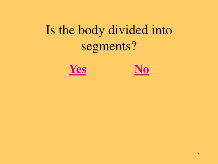 Is the body divided into segments?