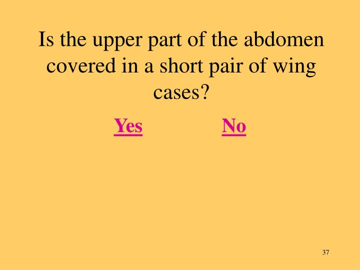 Is the upper part of the abdomen covered in a short pair of wing cases?