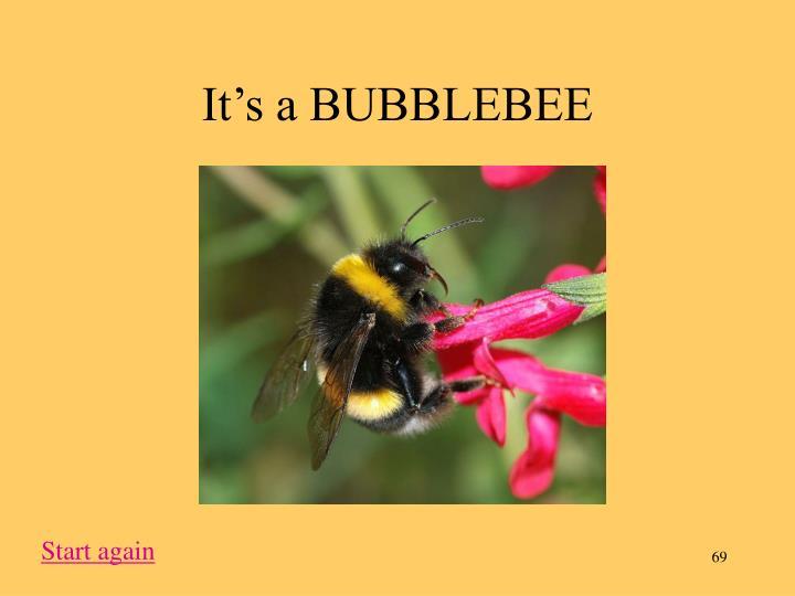 It's a BUBBLEBEE
