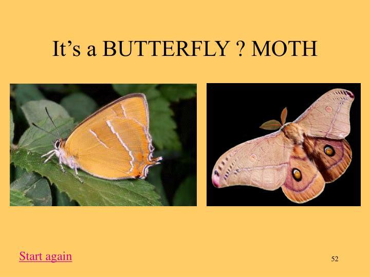 It's a BUTTERFLY ? MOTH