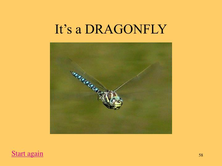 It's a DRAGONFLY
