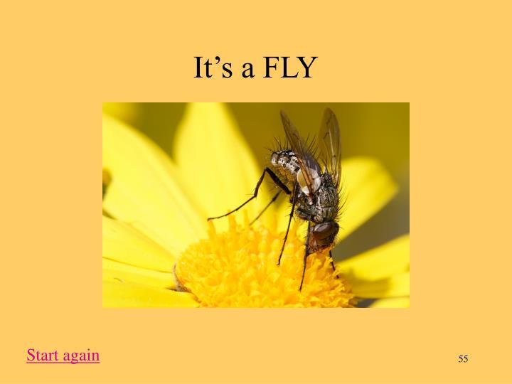 It's a FLY