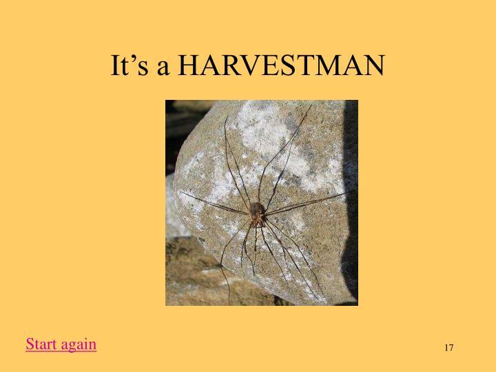 It's a HARVESTMAN