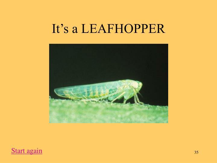 It's a LEAFHOPPER