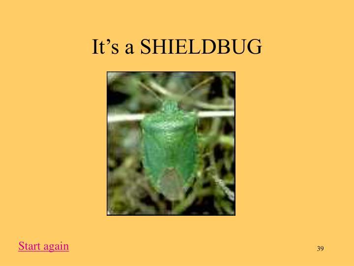It's a SHIELDBUG