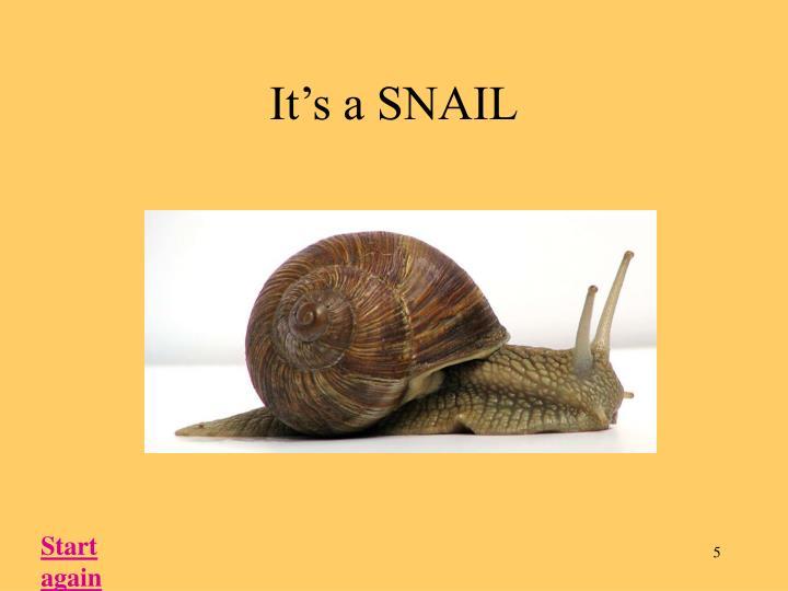 It's a SNAIL