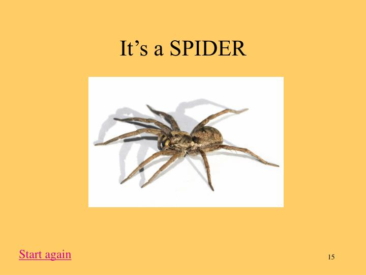 It's a SPIDER