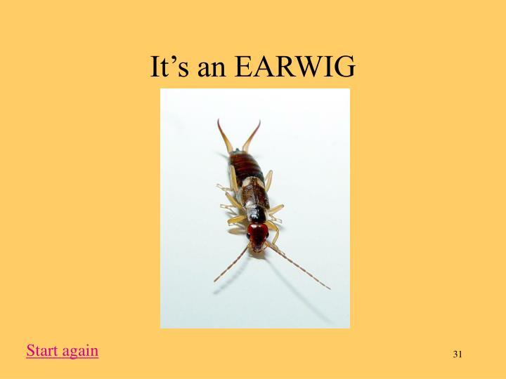It's an EARWIG