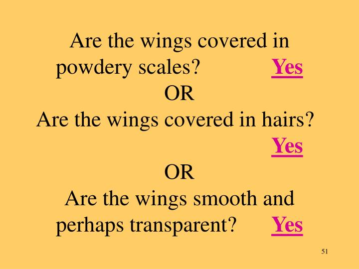 Are the wings covered in powdery scales?