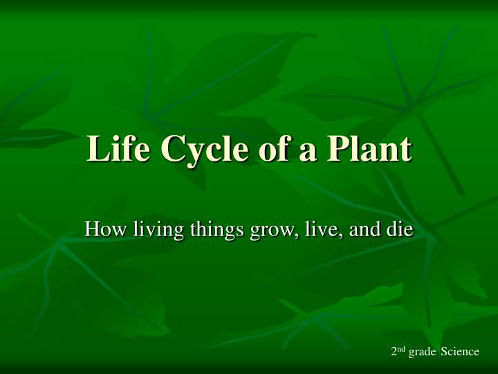 life cycle of a plant n.