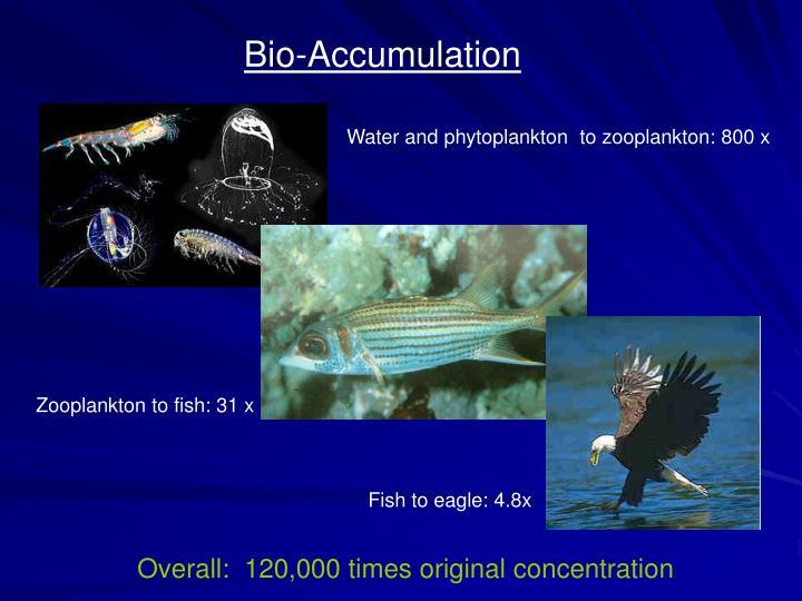 Zooplankton to fish: 31 x