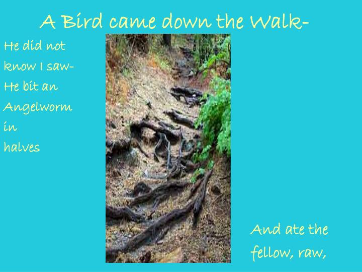 A bird came down the walk1