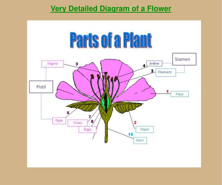 an overview of the plant life Plant life cycle introduction the plant life cycle begins with a seed the seed will sprout and produce a tiny, immature plant called a seedling.