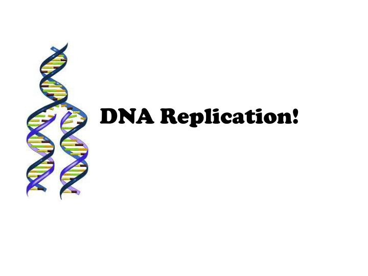 a description of the dna replication in sustaining life and growth
