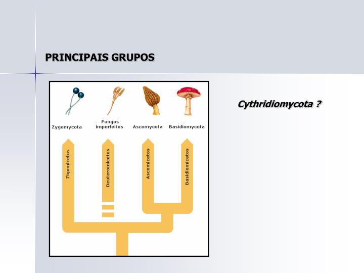PRINCIPAIS GRUPOS