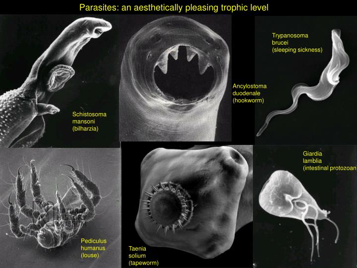 Parasites: an aesthetically pleasing trophic level
