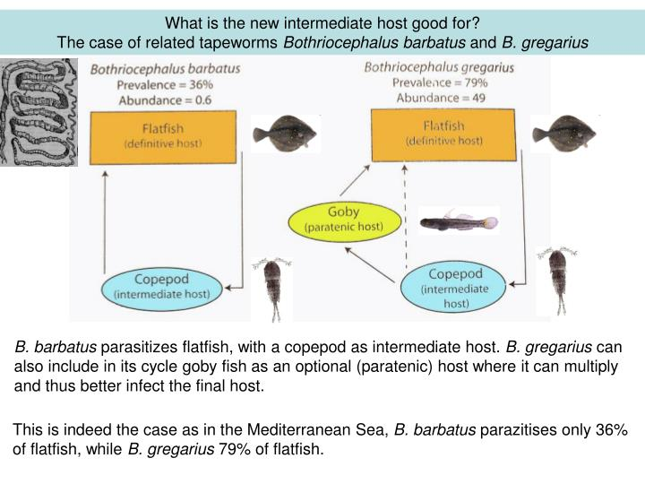 What is the new intermediate host good for